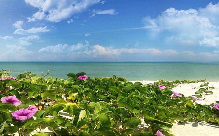 casas-en-venta-en-merida-playas-yucatan